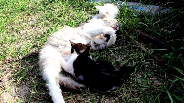 en katt och tre av hennes kattungar - djurfamilj bildbanksvideor och videomaterial från bakom kulisserna