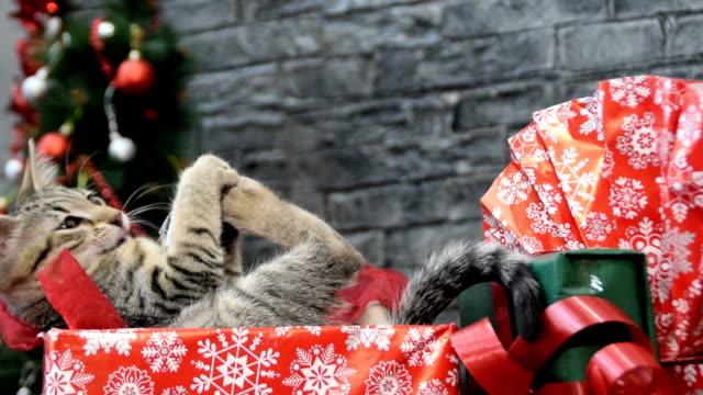 vídeos de stock e filmes b-roll de cat as a gift on christmas morning or new year's eve - fofo texturizado