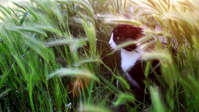 cat attacking - 飼い猫点の映像素材/bロール