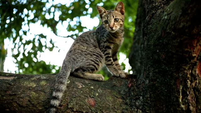 Cat Behavior, walk on the tree and sharpening claws video