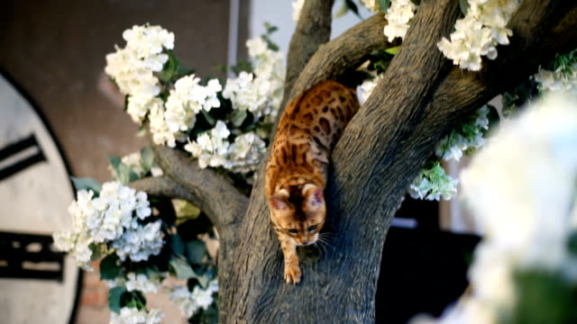 Cat Bengal Breed Play With Butterfly Beautiful bengal cat playing with butterfly on the tree shorthair cat stock videos & royalty-free footage