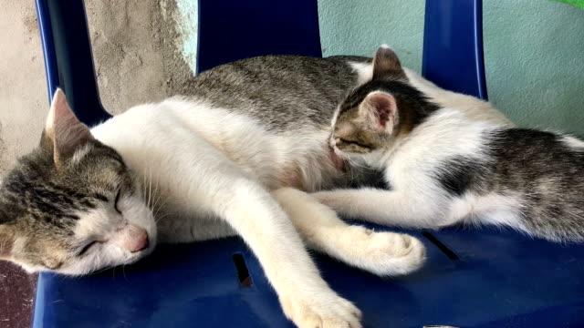 katt amning enda kattunge - djurfamilj bildbanksvideor och videomaterial från bakom kulisserna