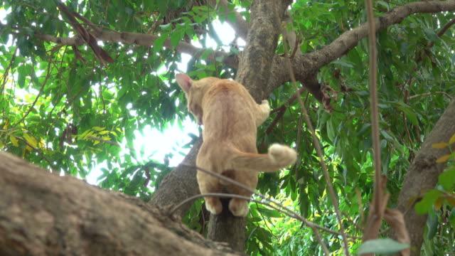 cat climbing down from a tree - obszar zadrzewiony filmów i materiałów b-roll