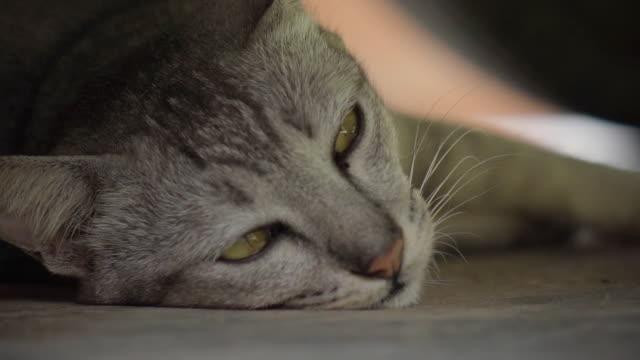 cat closing eye slow motion - gatto dal pelo corto video stock e b–roll