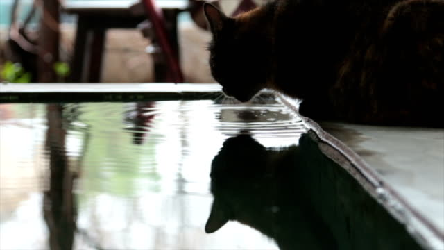 cat drinking water from an ornamental pool video