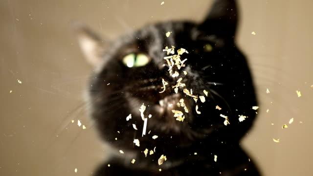 Cat Eating Catnip video