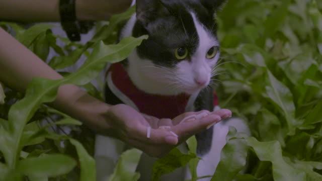 cat eating hairball paste video