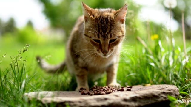 vídeos de stock e filmes b-roll de cat eating in back yard - felino