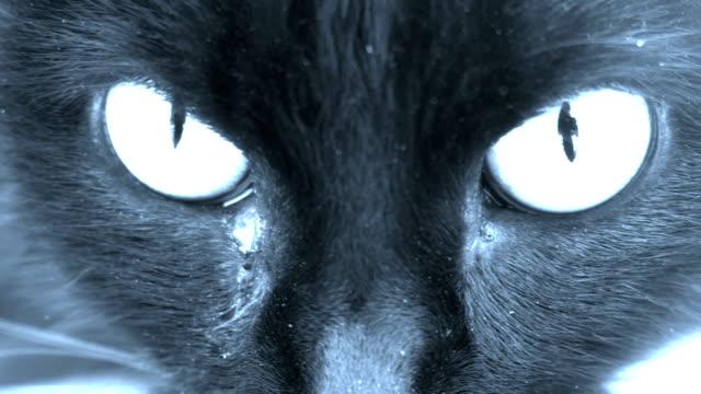 猫の目はカメラを見てクローズアップ。ホラーシーンホログラム - ネコ科点の映像素材/bロール