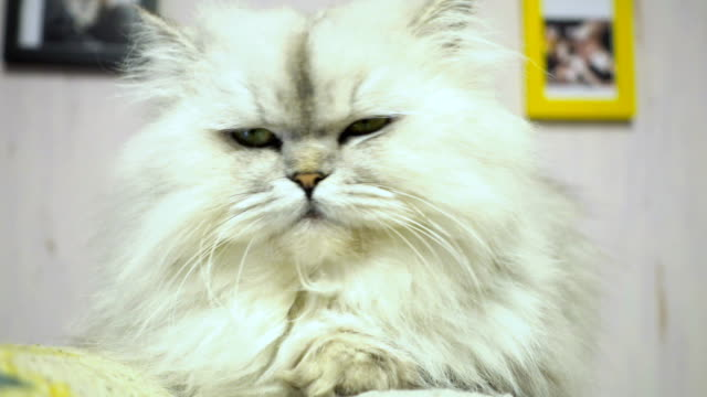 Cat face video