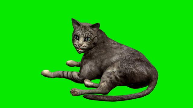 Cat Green Screen (Loopable) video