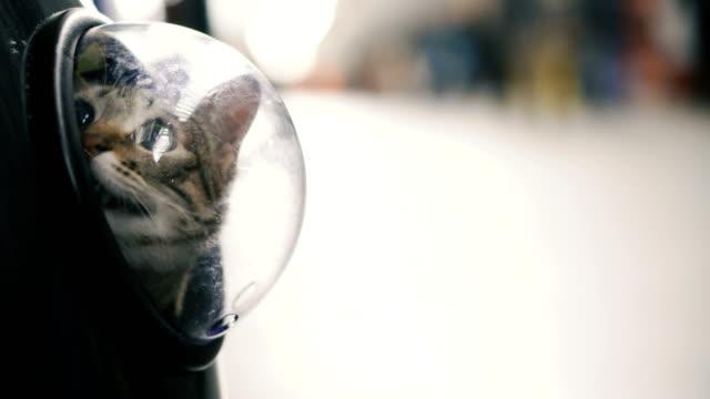 vídeos de stock e filmes b-roll de cat in a backpack with a porthole - mochila saco