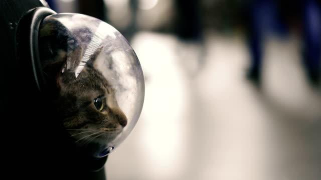 bir porthole ile bir sırt çantası kedi - sırt çantası stok videoları ve detay görüntü çekimi
