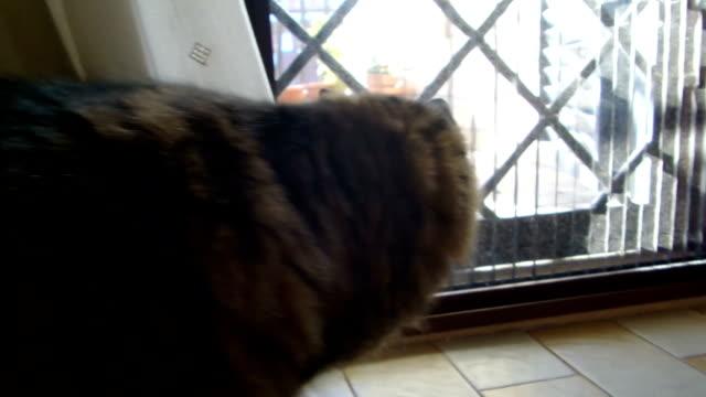 Cat In Ambush Behind The Door