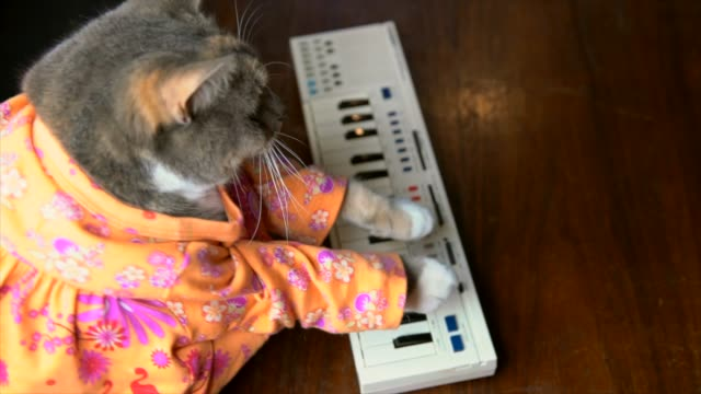 cat in colorful shirt playing keyboard piano
