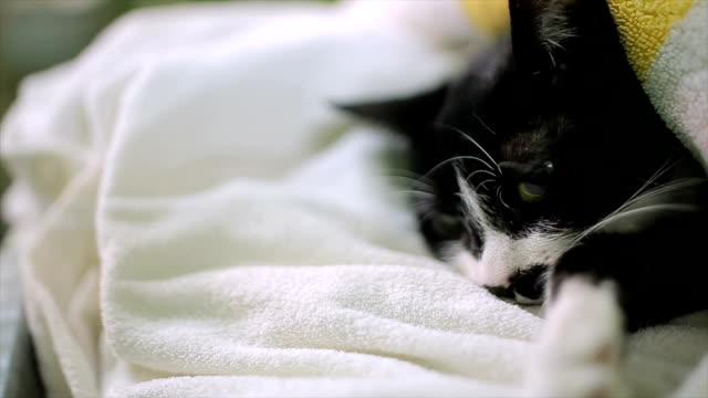 cat in deep anesthesia after the sterilization process video