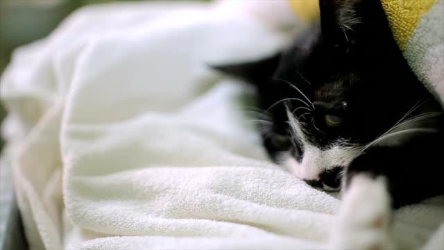 vídeos y material grabado en eventos de stock de gato en anestesia profunda después del proceso de esterilización - veterinario