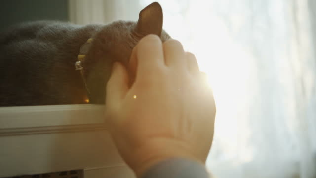 Cat in enjoying sunlight Fur Pov human hand petting video