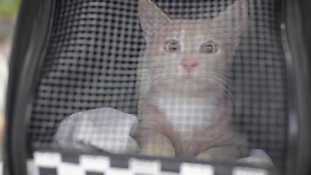 cat in pet carrier at veterinarian - portare video stock e b–roll
