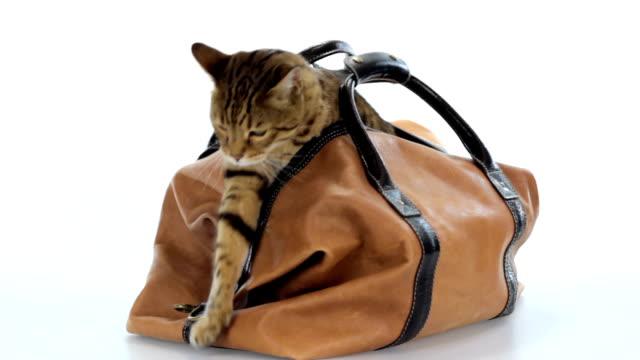 stockvideo's en b-roll-footage met kat in de zak - tas