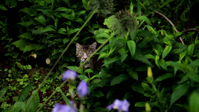 Cat in the bushes video