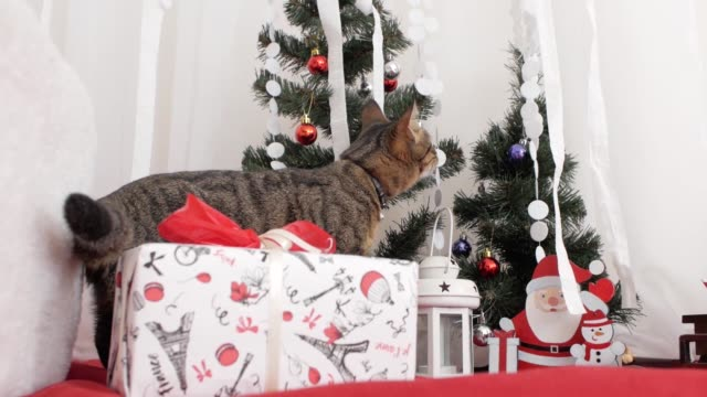 stockvideo's en b-roll-footage met kat in de decoratie van kerstmis - sleeping illustration