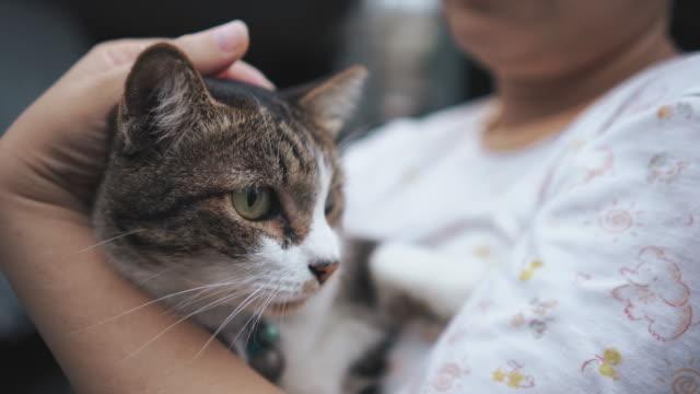 vidéos et rushes de chat dans l'étreinte d'une femme - femme seule s'enlacer