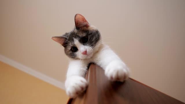 katten ligger på garderoben - looking inside inside cabinet bildbanksvideor och videomaterial från bakom kulisserna