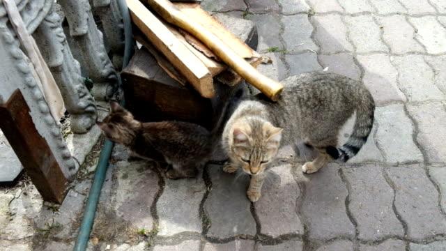 猫はウォーキング路上の - ソーサー点の映像素材/bロール