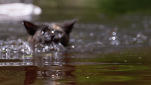 Cat Jumps into the Water and Swims. Kitten emotions. Slow Motion