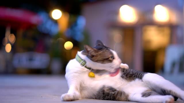 cu rt cat licking herself - уход за поверхностью тела у животных стоковые видео и кадры b-roll