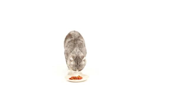 Cat loves food video