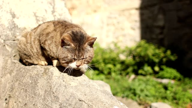 Cat meawing on a wall under the sun video
