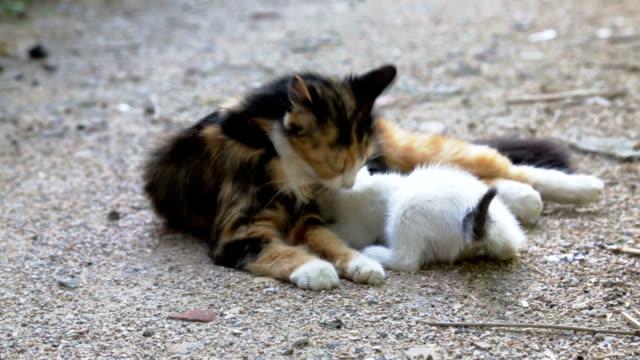 cat mother cleaning kitten on street video