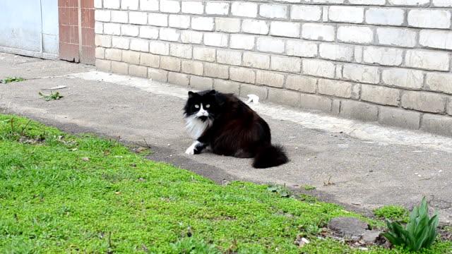 Gato cerca de la casa - vídeo