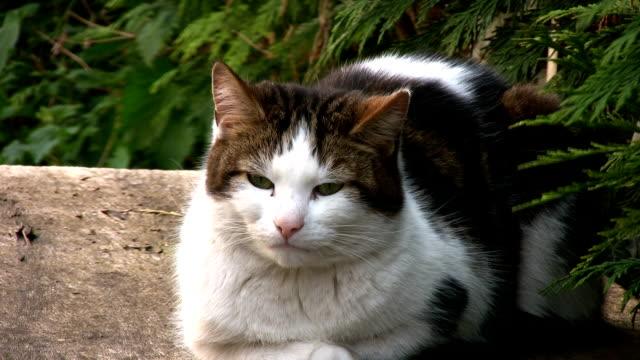 vídeos y material grabado en eventos de stock de cat no hace mucho, hd - parte del cuerpo animal