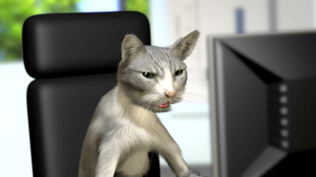 категория офиса - кошка смешанной породы стоковые видео и кадры b-roll
