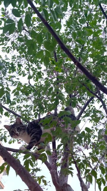 vídeos de stock, filmes e b-roll de gato em uma árvore - felino
