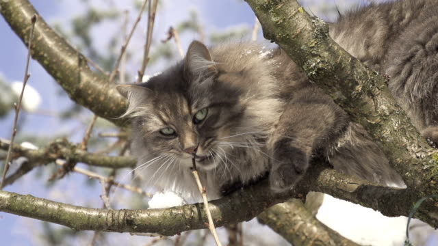 Cat on a tree video