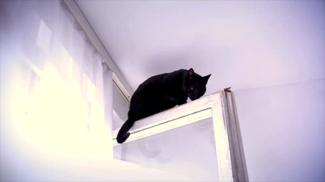 cat on the top of the window in a apartment - curiosità video stock e b–roll