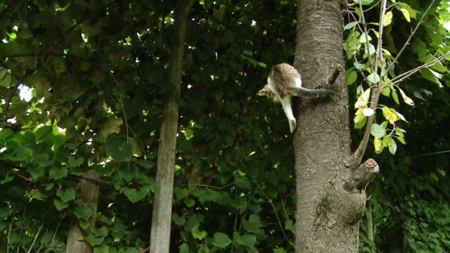 hd slow-motion: cat on the tree - kattdjur bildbanksvideor och videomaterial från bakom kulisserna