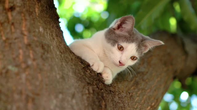 Cat on the tree video