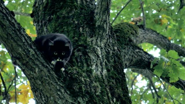 Cat on the tree. video