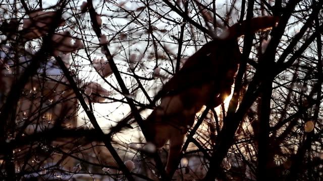 Cat on tree - vídeo