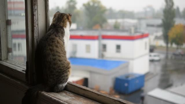 cat on window sill experiencing rain - davanzale video stock e b–roll