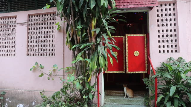 cat outside a red door