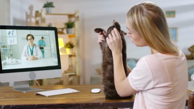 katt ägare be om råd från online vet - veterinär, undersökning bildbanksvideor och videomaterial från bakom kulisserna