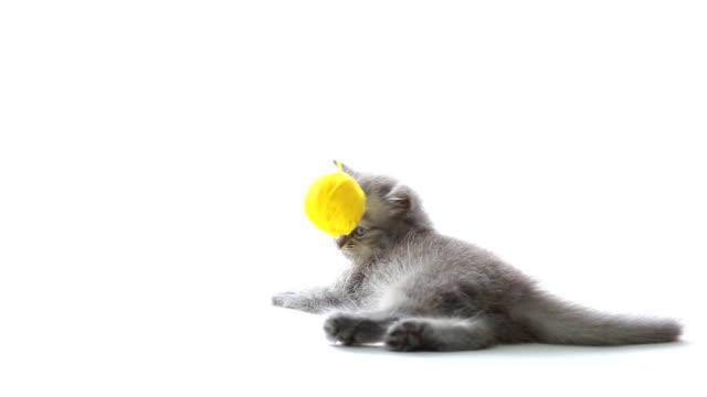 stockvideo's en b-roll-footage met cat playing - kitten