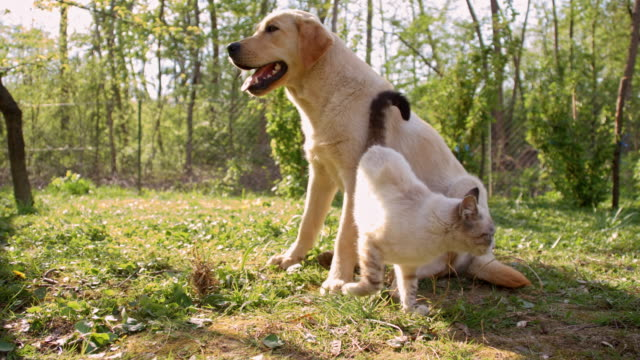 Cat playing with a young dog Camera stabilization shot of a cute cat playing with a young dog in the orchard. Also available in 4K resolution. kitten stock videos & royalty-free footage