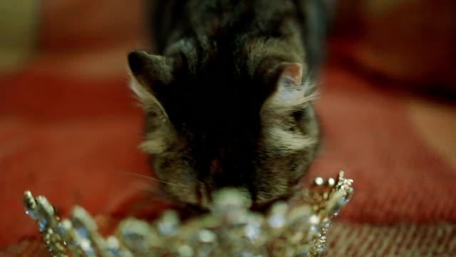 vidéos et rushes de chat jouant avec couronne - couronne reine